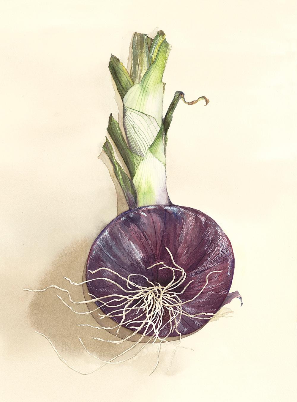 2393_Onion.jpg