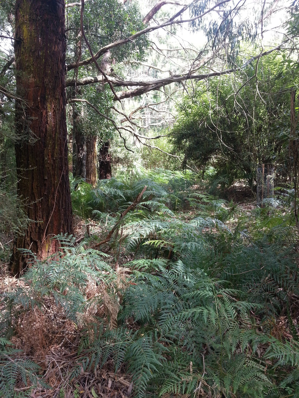 The land at Endeavour Fern Gully, looking almost exactly as it would have during the time of the Bunurong people