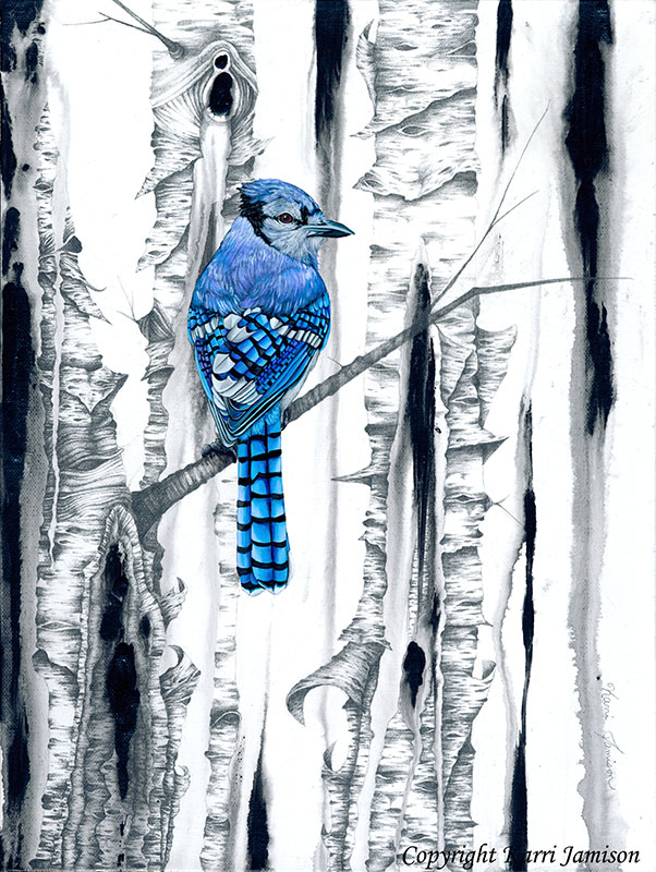 Blue Jay and Birch Tree