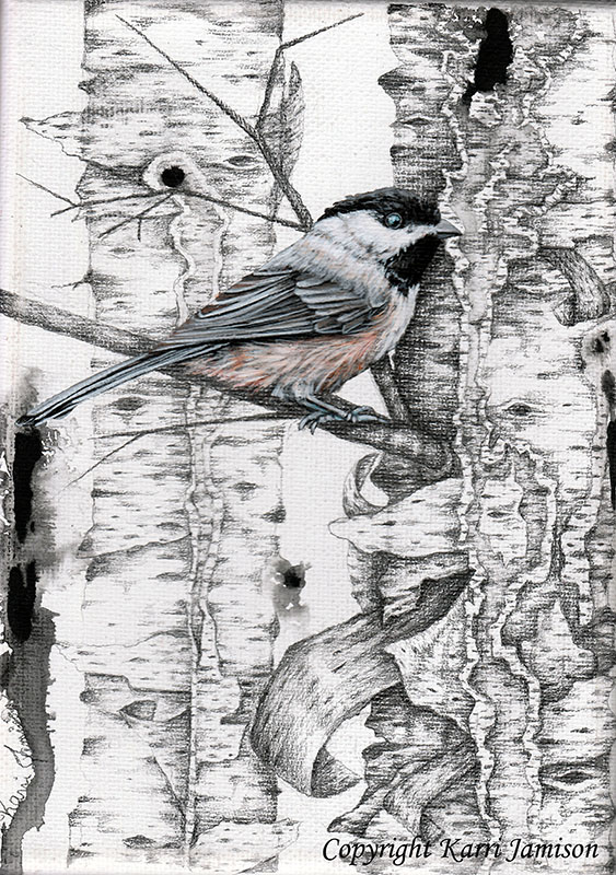 Black Capped Chickadee on Birch