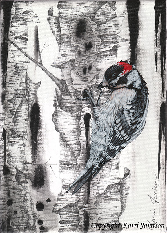 Downy Woodpecker on Birch Trees