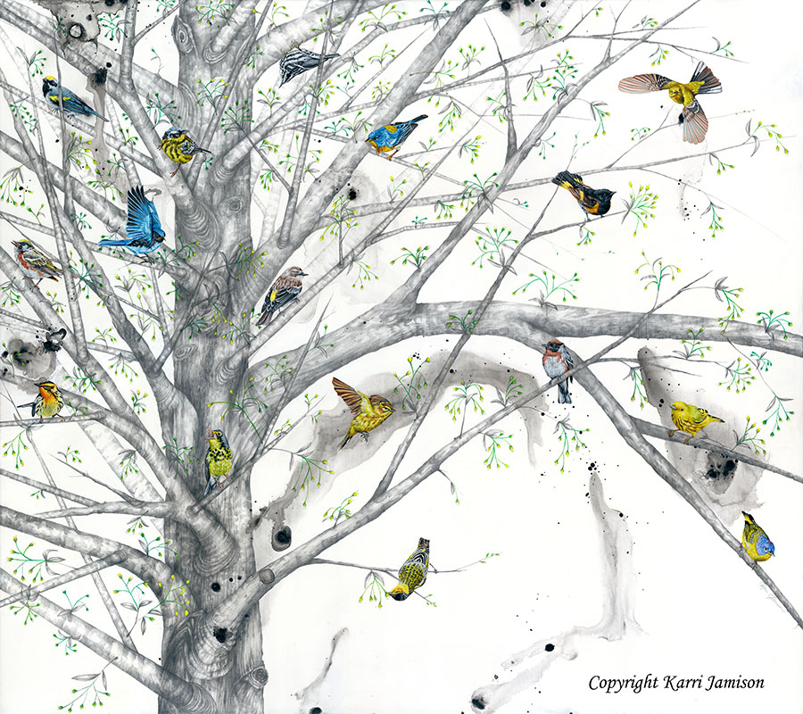Warblers in Maple Tree