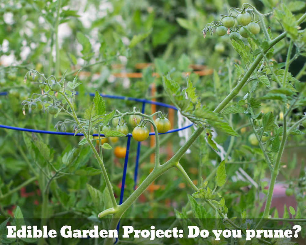 Edible Garden Project Do You Prune www.glutenfreetravelette.com