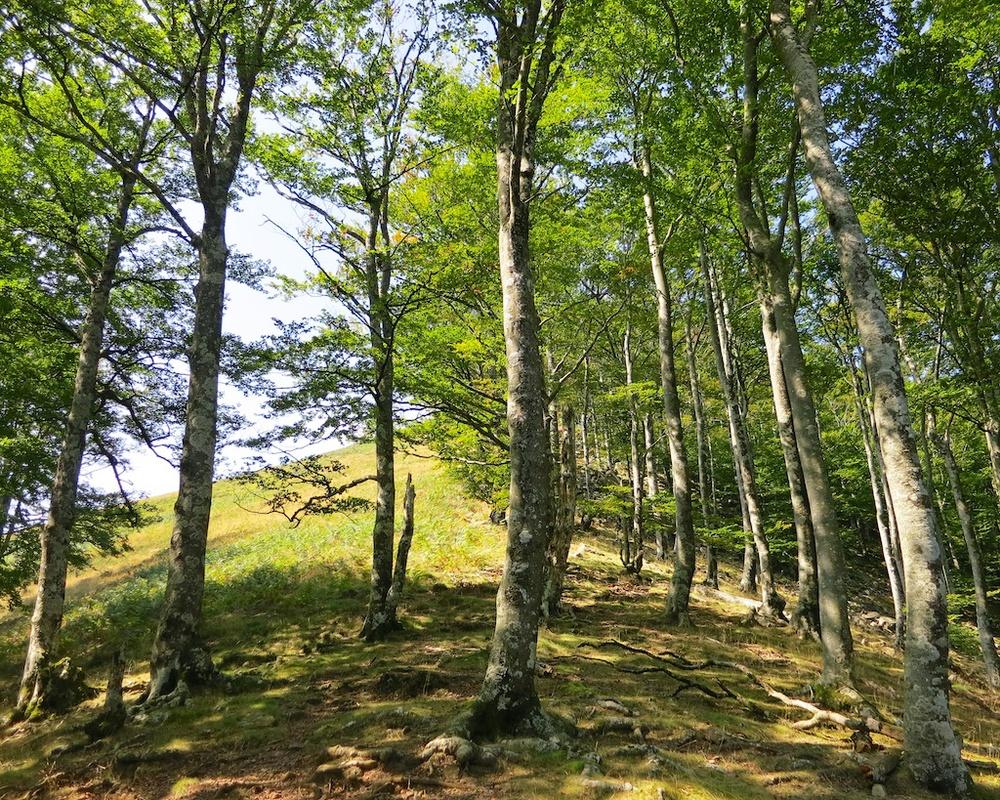 Frontier Views Hike Spain France 4.jpg