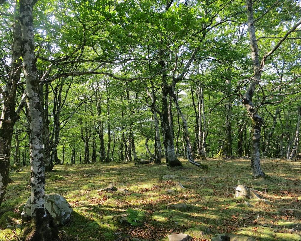 Frontier Views Hike Spain France 21.jpg