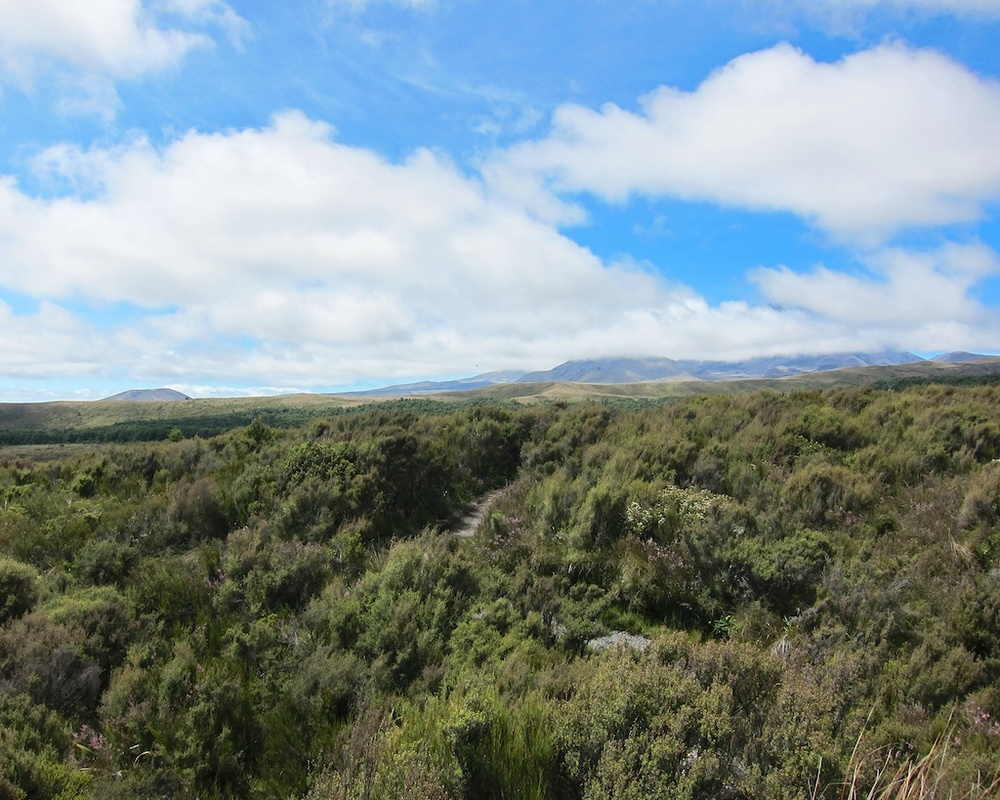 Taranaki Falls Hike Tongariro National Park