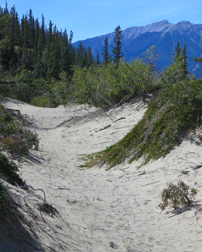 Sand Dunes, Jasper National Park