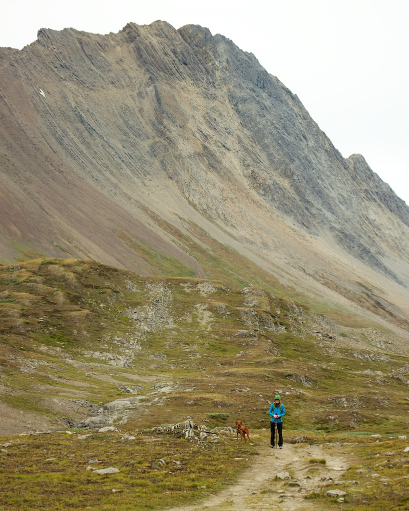 Hiking Wilcox Pass in Jasper National Park