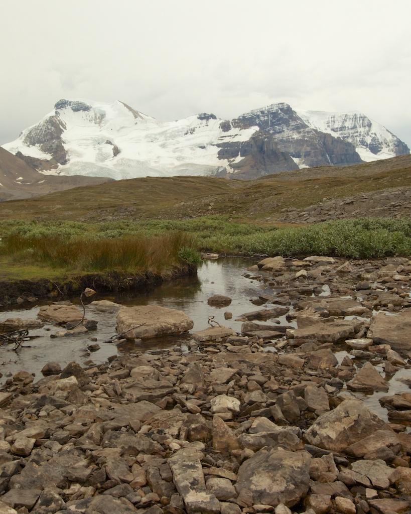 Hiking Wilcox Pass in Jasper National Park