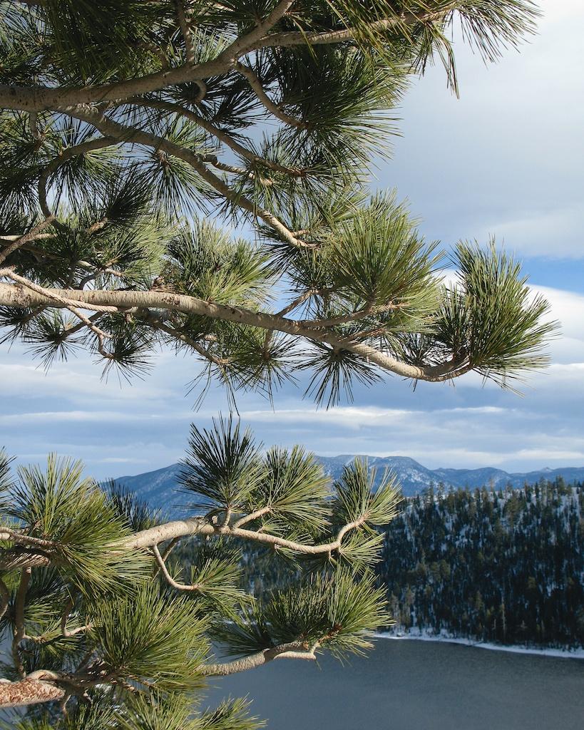 Emerald Bay Lake Tahoe Tree