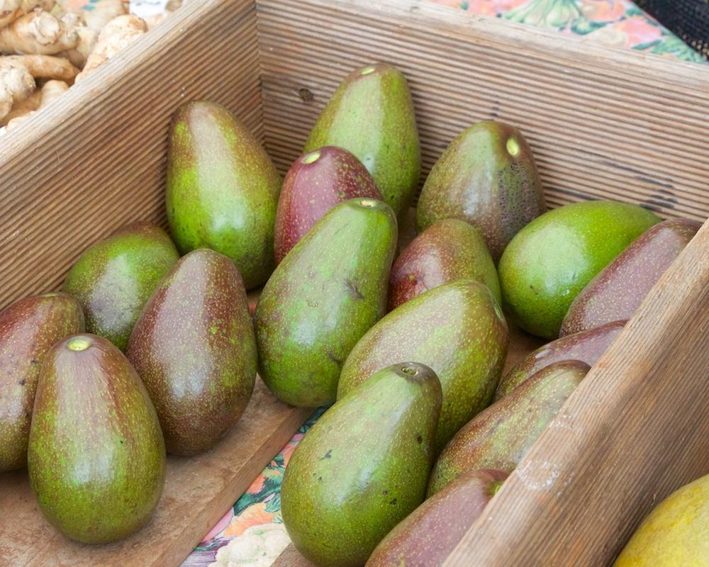 Avocados at the Waipa Farmers Market