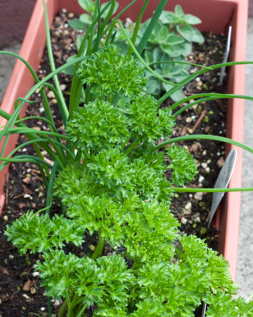 Kitchen Herb Garden in A Container