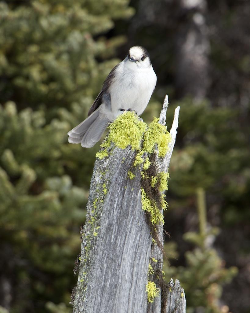 Joffre Lakes Provincial Park - Middle Lake