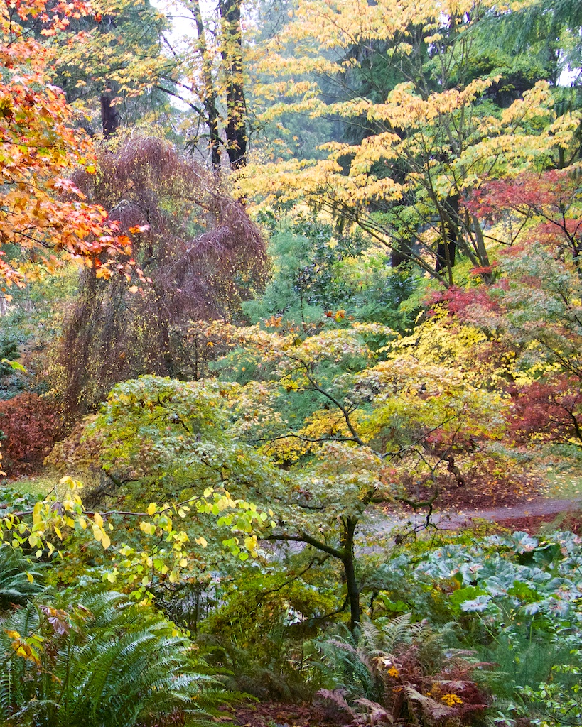 A Perfect Fall Day In Seattle - Washington Park Arboretum
