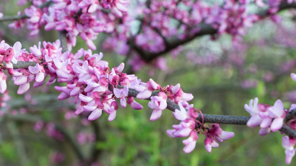 Blossoms-1.jpg