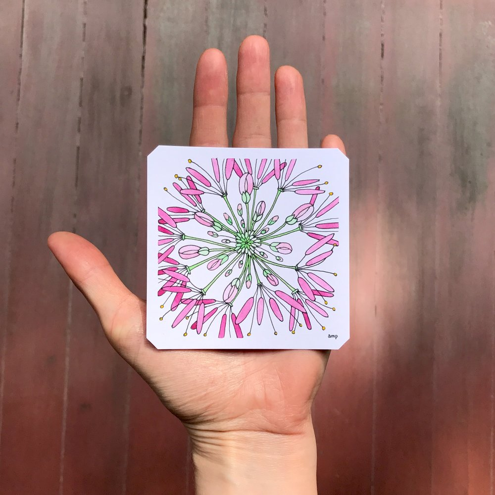 Pink Cleome (Sold)