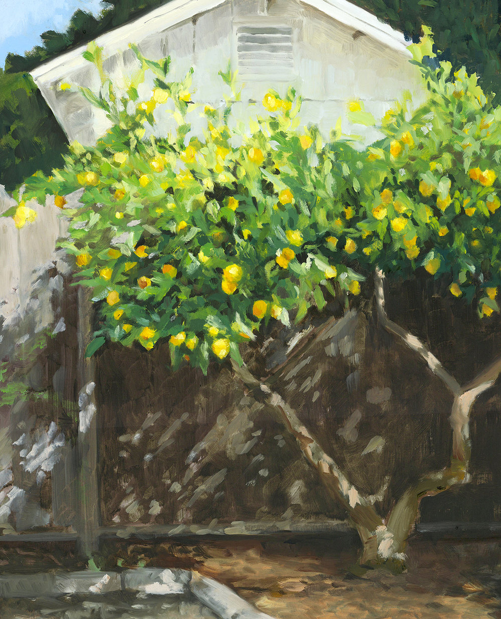 "The Lemon Tree, 2017, 16""x20"", Oil on Panel"