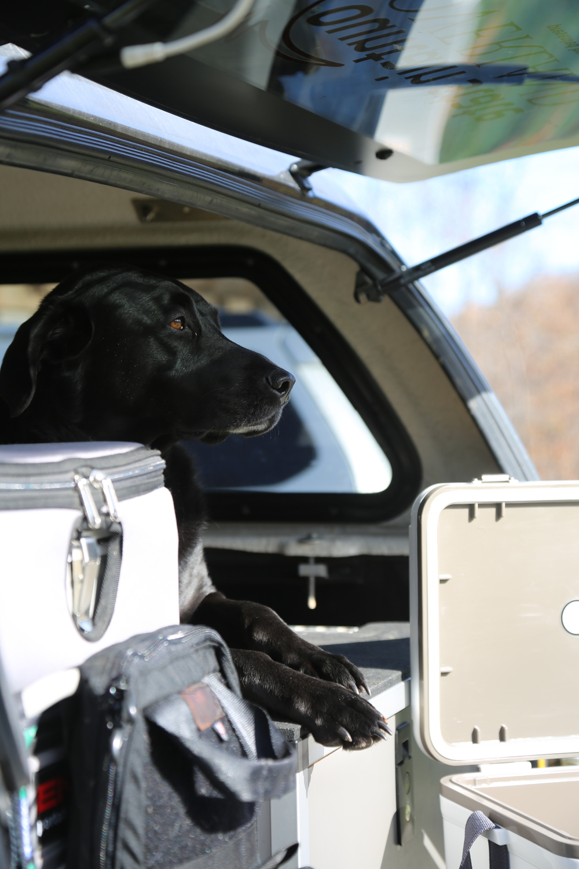 Dogs love Goose Gear.