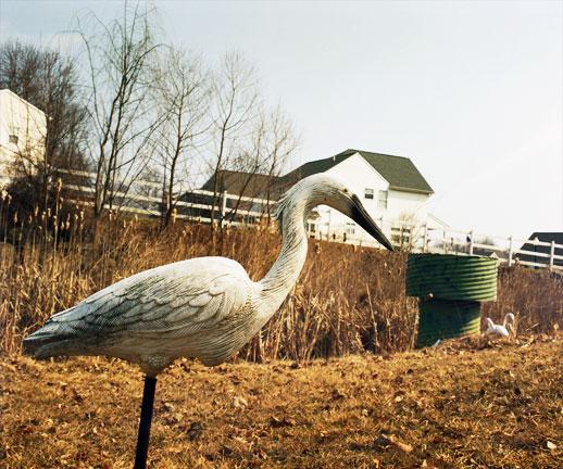 plastic_bird.jpg
