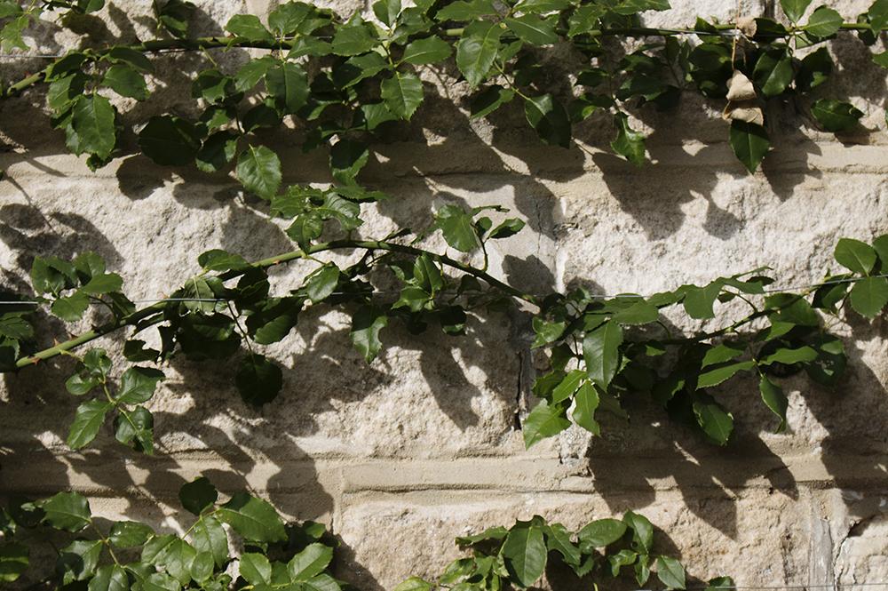 Casarotti Web - Up Close - 2.jpg