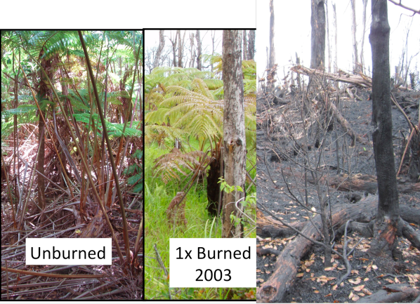 """Photo on left: Unburned - Middle photo: Burned in 2003, photo taken in 2010 - Photo on right: Burned again in 2011""   Photo credit - The National Park Service"