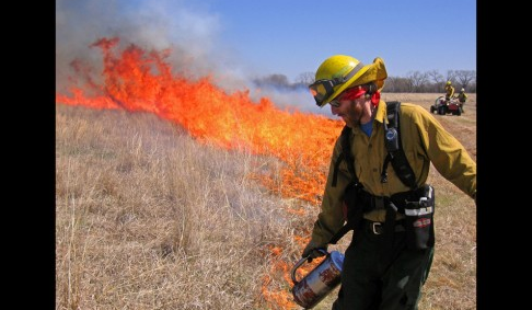 "Above: ""A fire team lights a restoration burn on the Dahms Tract, Platte River and Wood River area of Nebraska. The Nature Conservancy hopes to demonstrate that there is economic as well as conservation value in restoring tracts of native grasslands. Photo by Chris Helzer/The Nature Conservancy"""