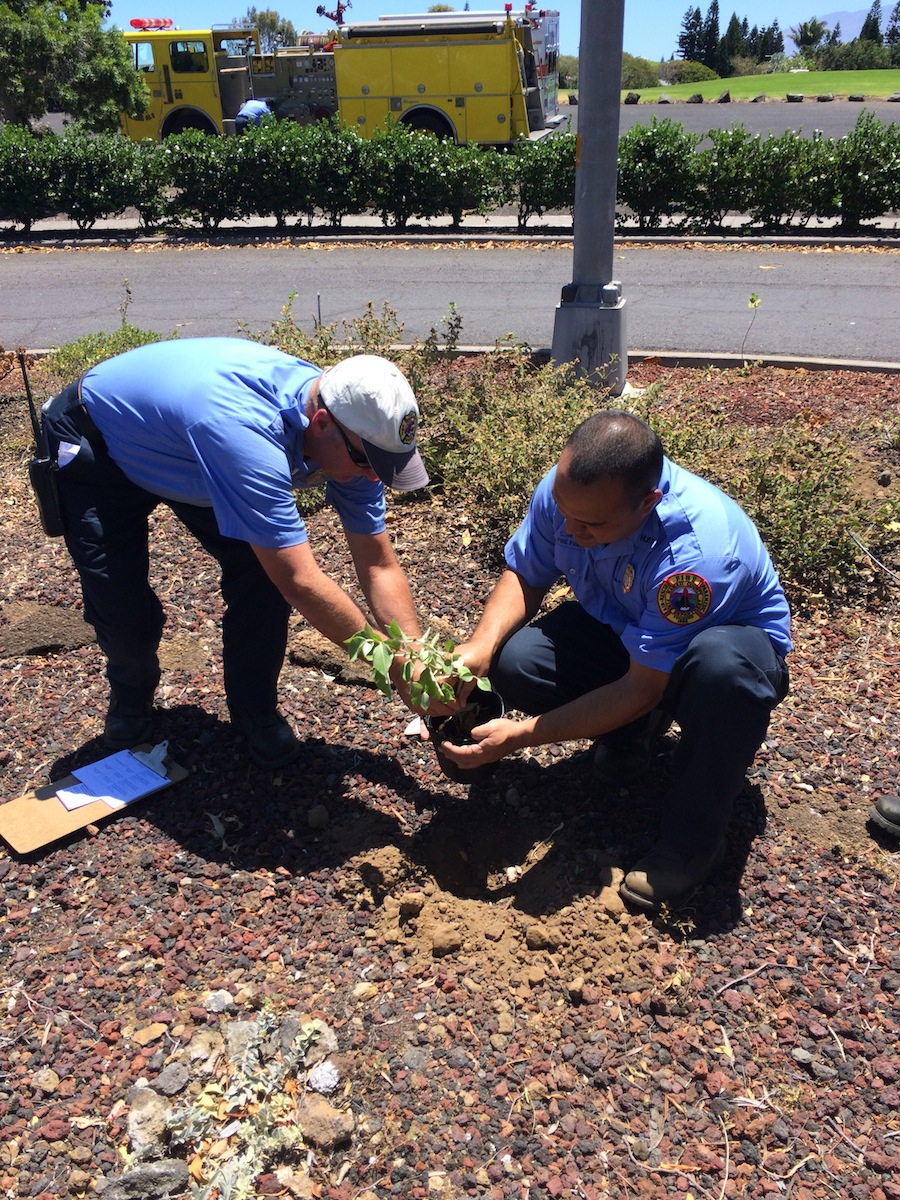 Local HFD firefighters help plant various native plants like kuluʻī in our Firewise garden.