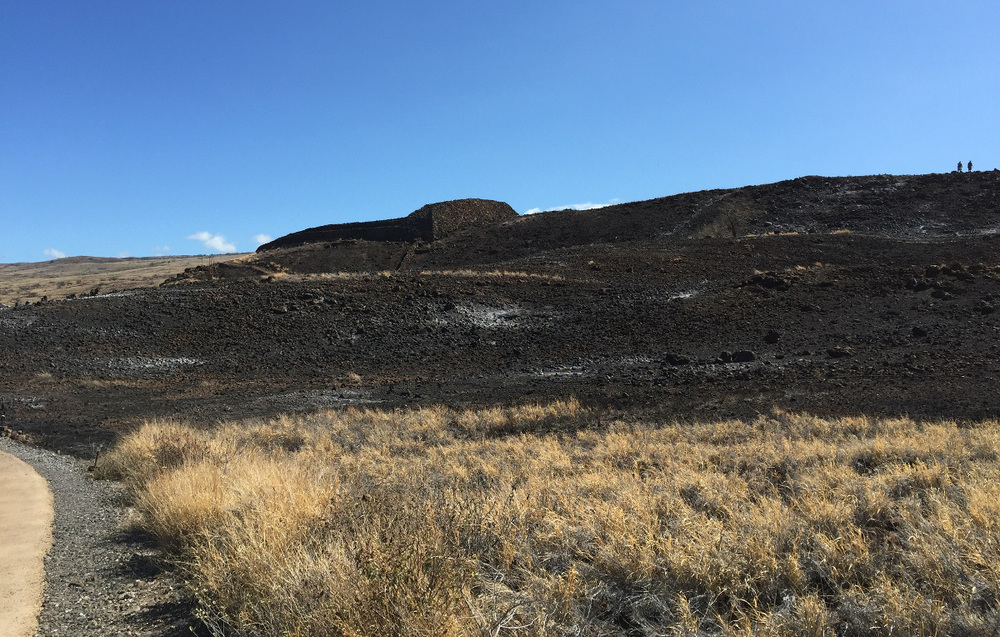 """90 percent of the vegetation on the park's 80 acres. Pu'ukoholā Heiau is in the background. (NPS photo)"""