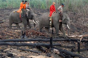 """In this Sunday, Nov. 10, 2015 photo, forestry officials ride on the back of an elephant as they patrol an area affected by forest fire in Siak, Riau province, Indonesia."" (AP Photo/Rony Muharrman)"