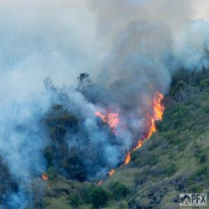 """Flames move uphill in Oahu wildfire."" Credit: PFX"