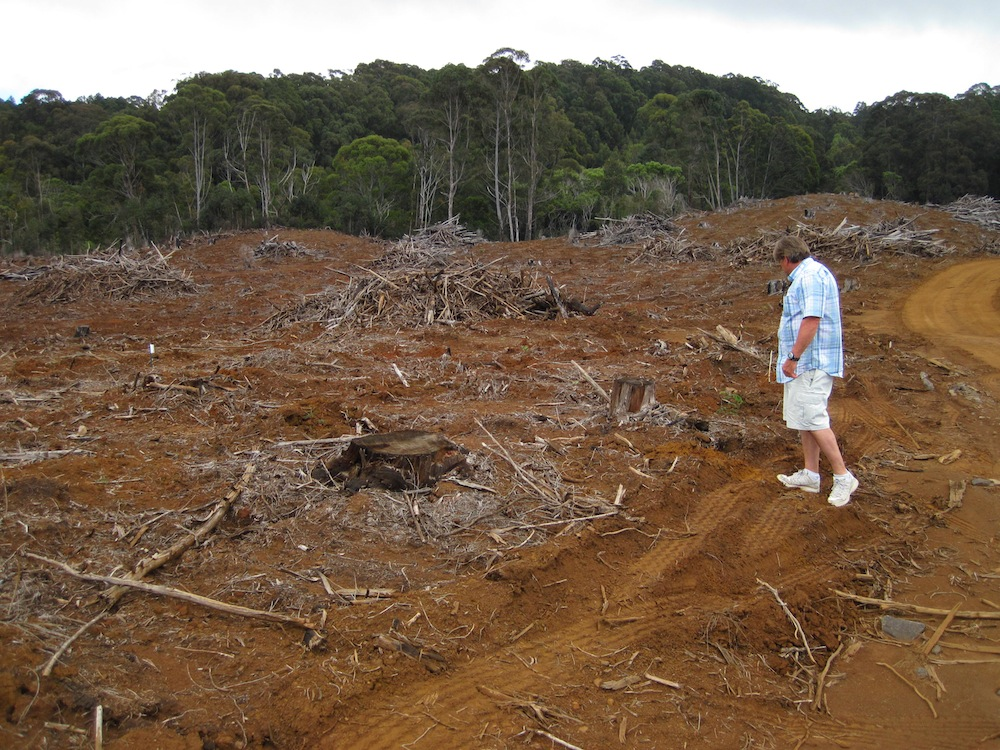 Kauai Division of Forestry and Wildlife plan to have slash piles hauled out for biomass.