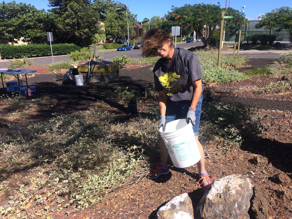 WVA Board President, Amy Swan, endures the high winds of Waikoloa to clear debris from the garden.