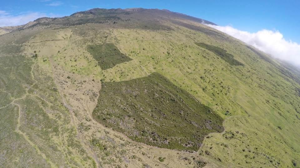 """The dark green patches of land are the result of a 20-year dryland forest restoration project on ʻUlupalakua Ranch lands in Auwahi, Maui."" Credit - Dr. Art Medeiros"