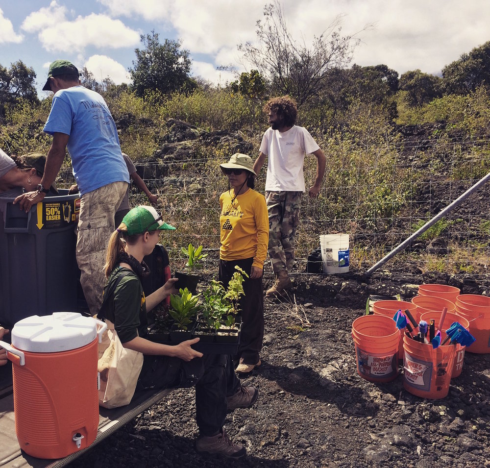 Preparing plants and field equipment for a day of planting and wildfire discussion at Kipuka Oweowe in Puʻuwaʻawaʻa.