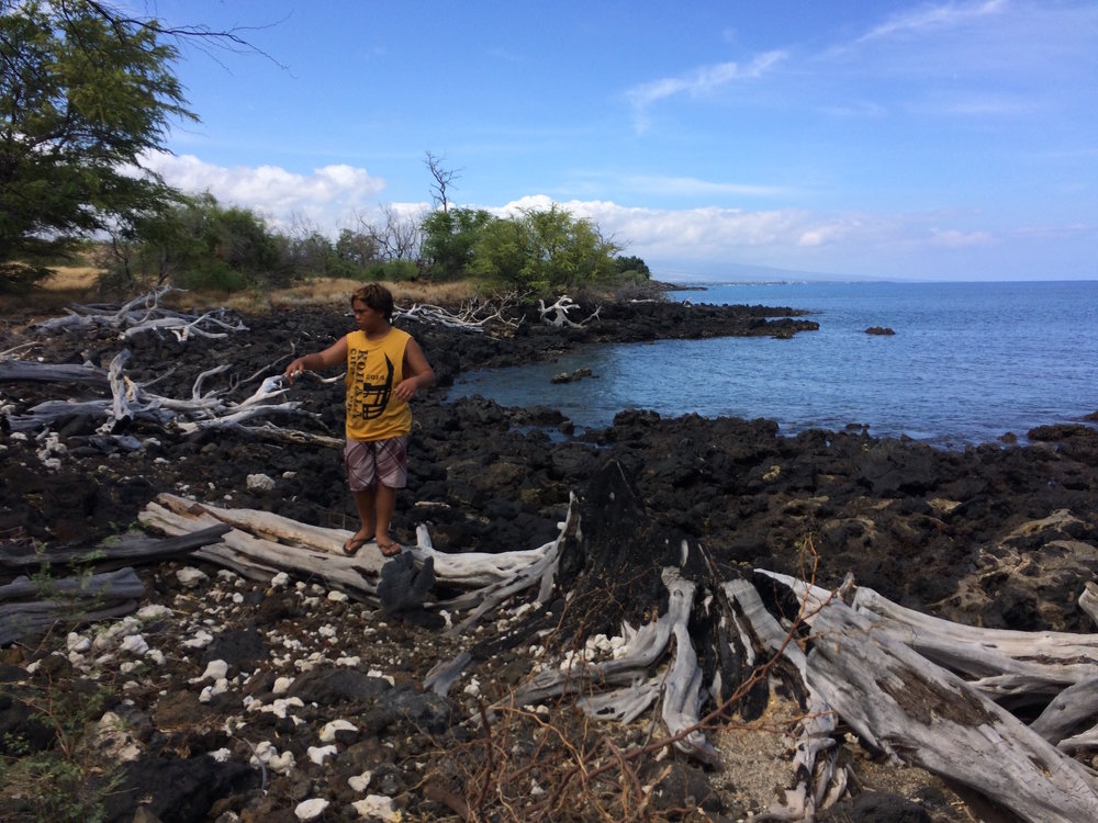 Ocean Warrior scanning area for clues to previous fires, including charred tree stumps.