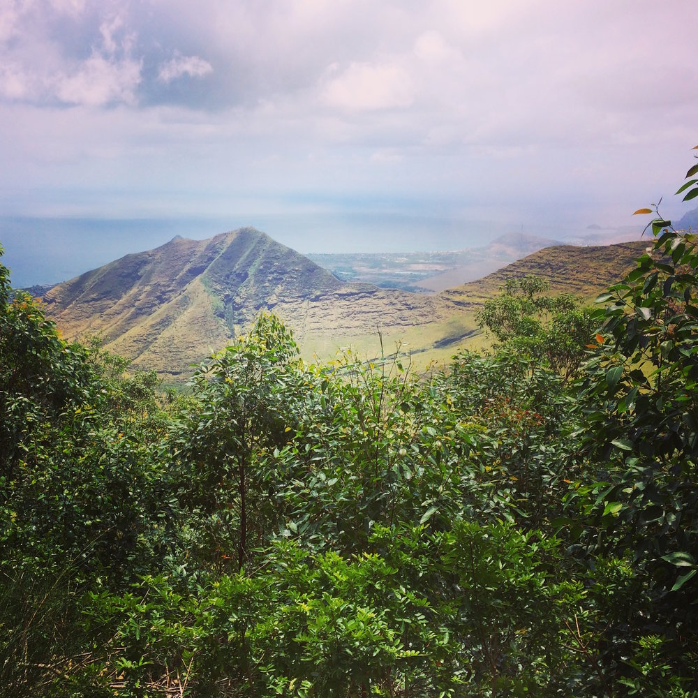 Back of Nānakuli Valley where remnant native forests still exist.