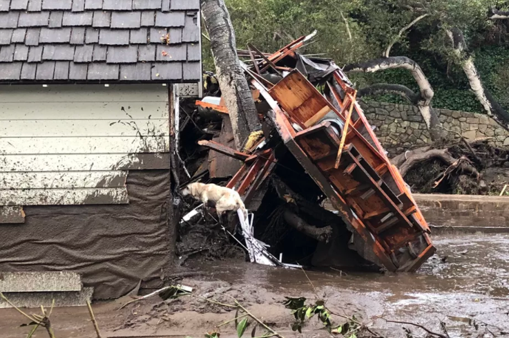 """Santa Barbara County Fire search dog Reilly looks for people trapped in the debris left by devastating mudslides in Montecito, California."" Credit: Mike Eliason/Santa Barbara County Fire"