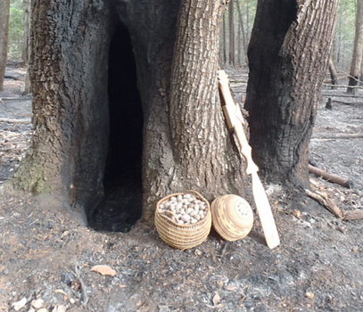 """Shown in this image is a California-hazel-stem basket holding tanoak acorns that were collected from the 2015 Klamath River Prescribed Fire Training Exchange (TREX) burn area. Also shown is a Karuk woman's ""work"" basket cap and an acorn cooking paddle made of Pacific maple. These are a few of the resources used by Karuk women to gather and prepare acorn soup. This burn reduced acorn pests, cleared out surface and ladder fuels to improved acorn gathering, and maintained the tanoak cavity at the base of this older tree. Cavities like this are important habitat for animals that hunt small game that eat acorns. ""  Credit: Frank Lake, USDA Forest Service and Karuk Tribe."