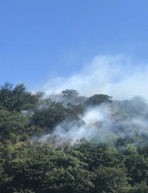 """Honolulu fire responded to a brush fire in Waimea Valley on Tuesday. (Image: Sunny Platt)"""