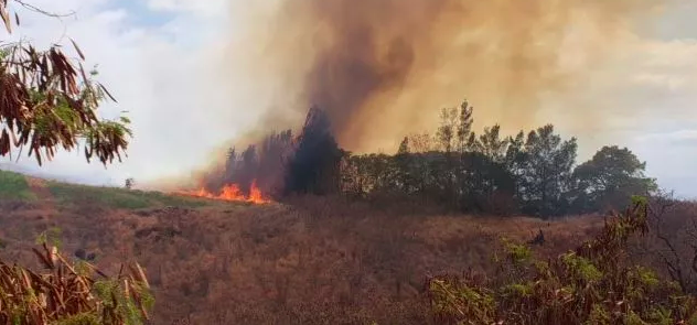 """Maui firefighters are battling a brush fire in Kula Agriculture Park on Sunday."" Credit: Maui Fire Department"