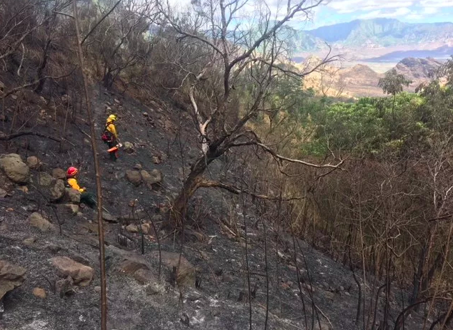 Makaha Valley fire that burned precious native forest. Credit: Dr. Clay Trauernicht