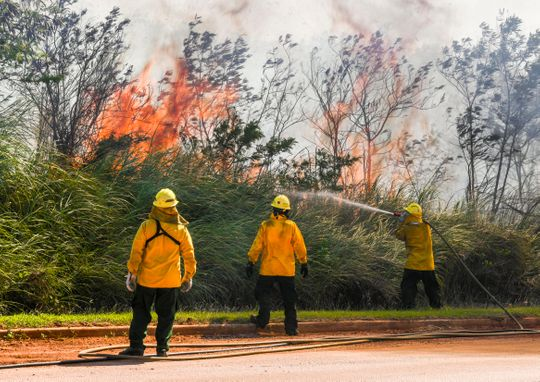 """Department of Agriculture Forestry Division employees battle a wildland fire that tries to break through the trees and brush lining the road leading to LeoPalace Resort Guam on Tuesday, March 5, 2019."" Credit: Rick Cruz/PDN"