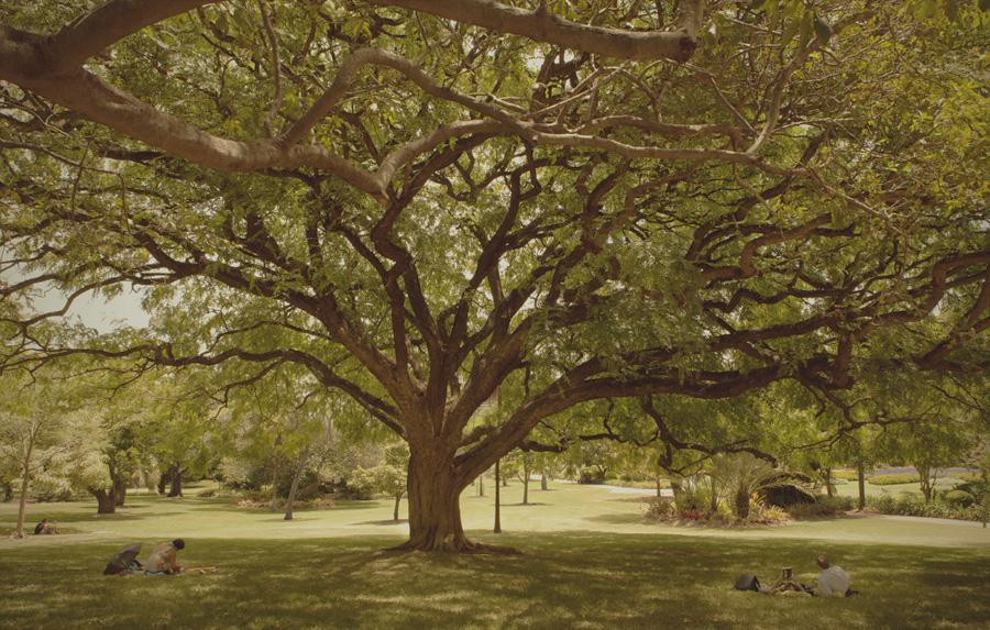 20120111231100_tree.jpg