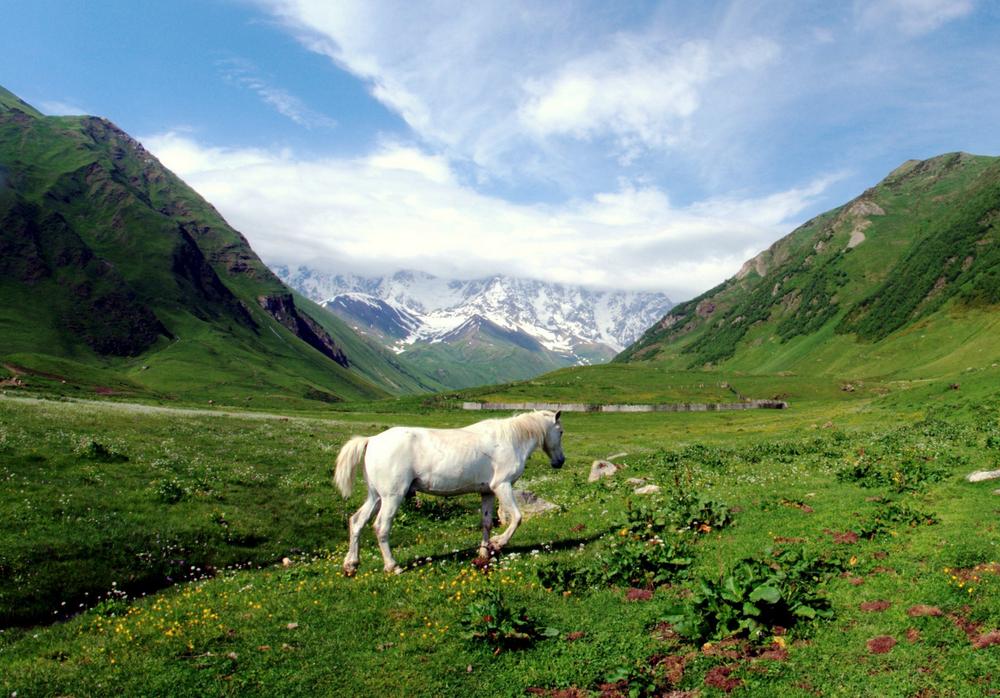4 northcaucasuslandwordpresscom.jpg