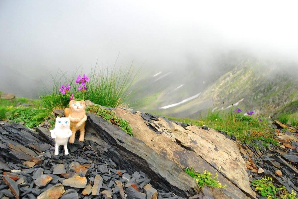 Перевал находится на высоте почти трех тысяч метров над уровнем моря, но даже тут цветут милые цветочки.