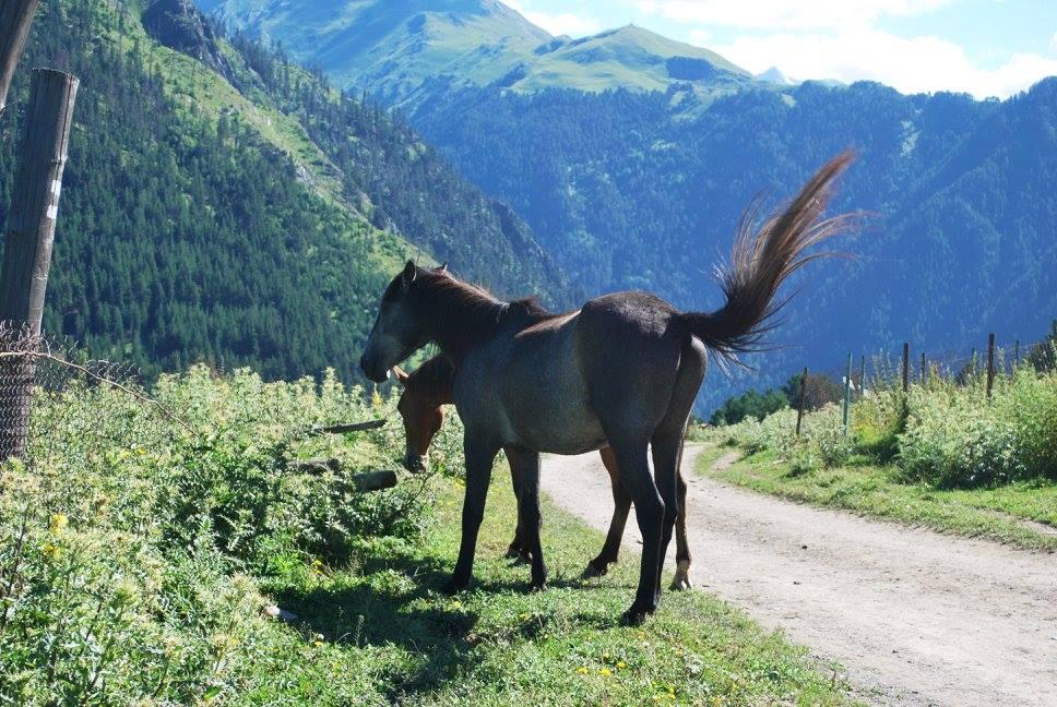 Совершенно чудесные тут кони, и много - при желании турист может попросить о конной прогулке с опытным проводником.