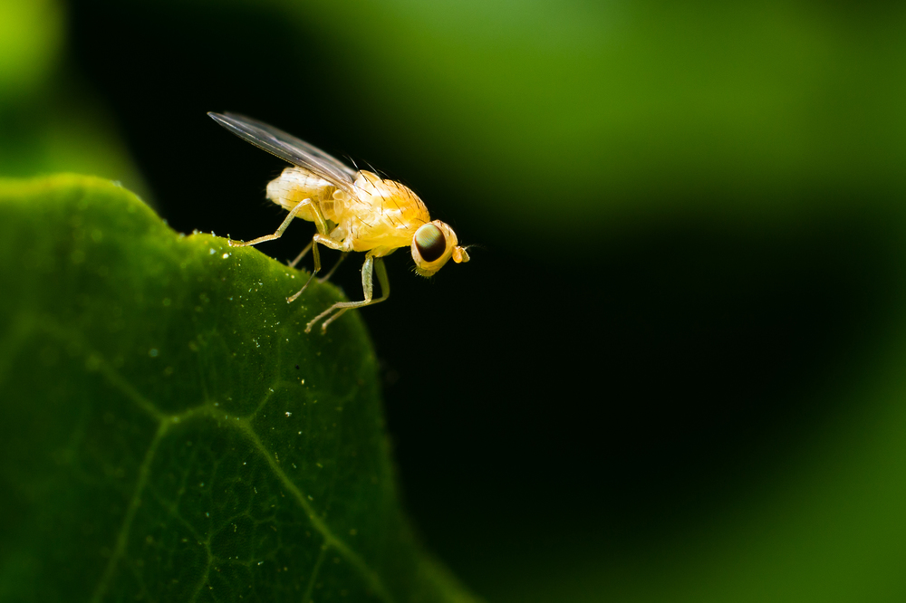 Flies are a great place to start, they are everywhere and most present an easy subject when approached slowly.