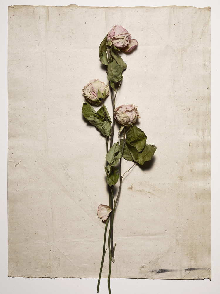 A Dozen Roses II - 6 images