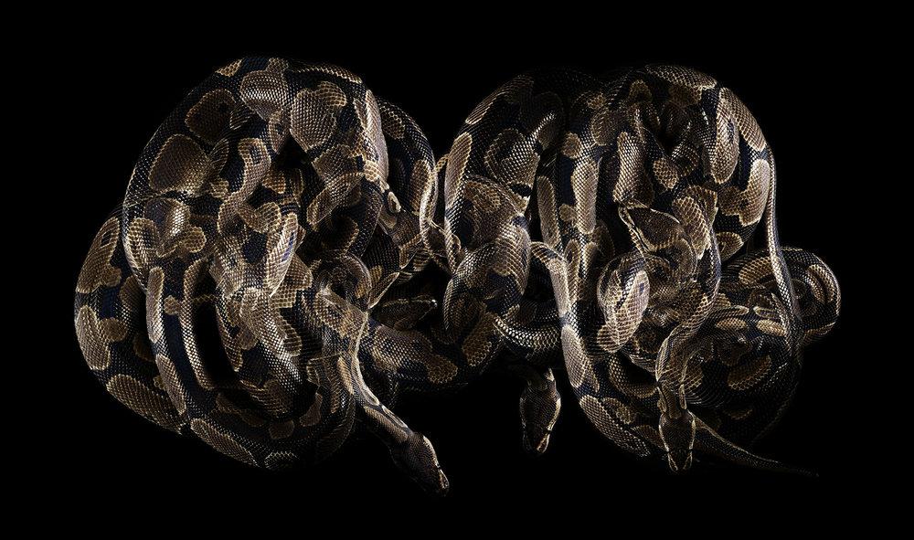 snake_pw