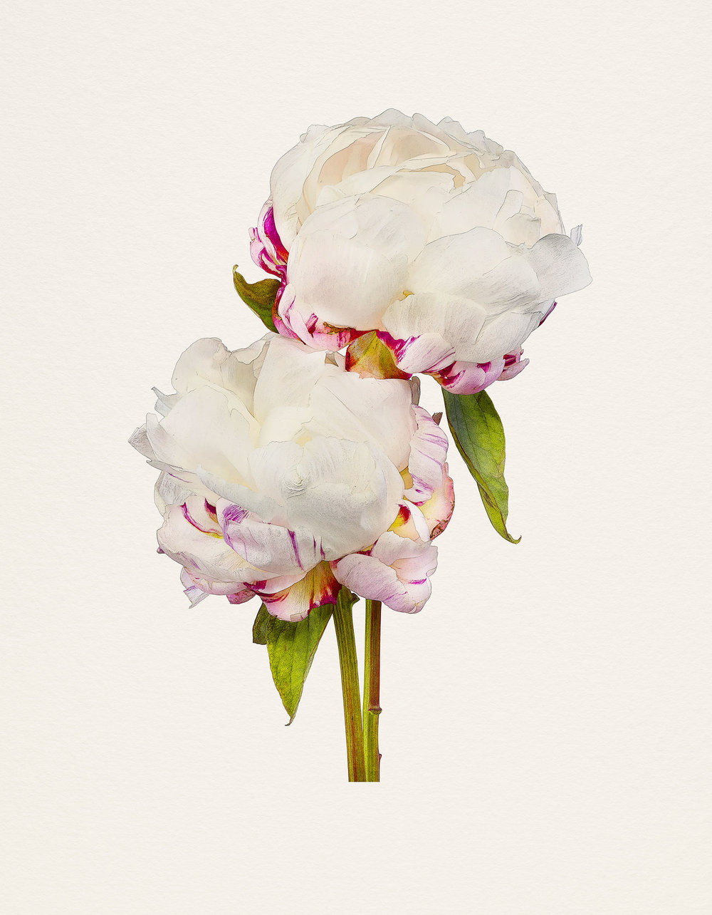 the most beautiful flowers_pw
